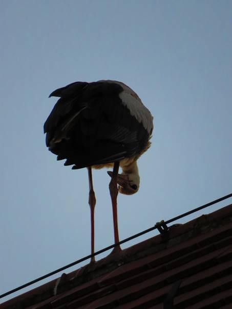 Ein Storch vollzieht einen Perspektivwechsel